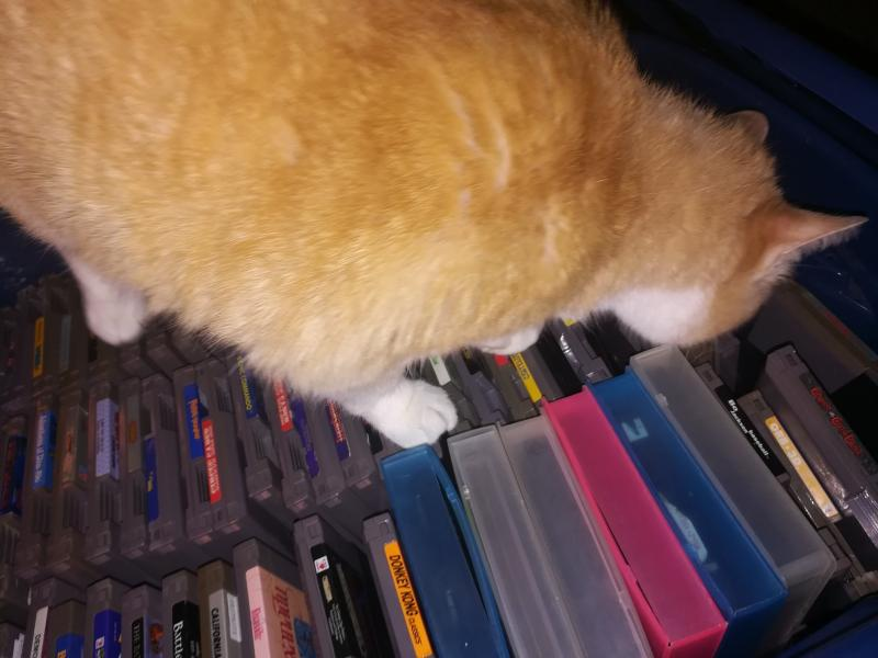 Orange cat inspecting a box of NES games